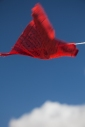 A Tibetan Buddhist Prayer Flag blows in the wind, Leh Gompa, Ladakh